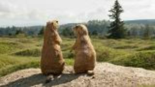 Who Made Hillocks? - Video