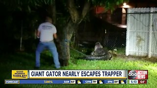Alligator euthanized after breaking through Florida home fence