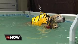 K-9 aquatics helps dogs with low impact exercise - Video