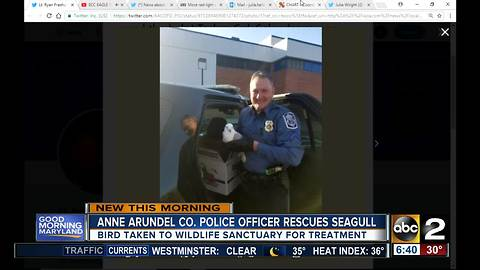 Anne Arundel Co. police officer saves seagull