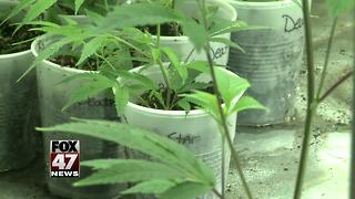 State will let marijuana shops stay open for now - Video