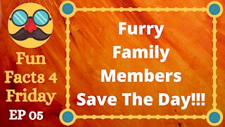 Furry Family Members Save The Day!!!