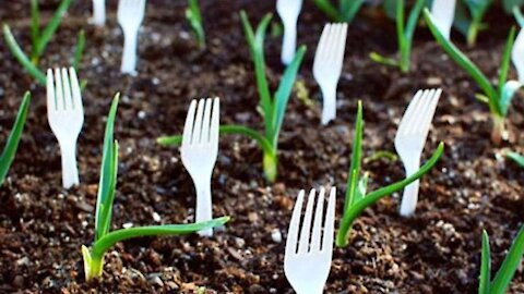 Stop Throwing Away Those Plastic Utensils. Here's 5 Reasons Why You Should Plant Them Instead