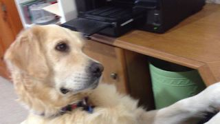 Dog Has Emotional Reaction To Video Of Crying Puppy - Video