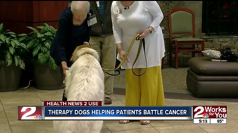 Therapy dogs helping patients battle cancer