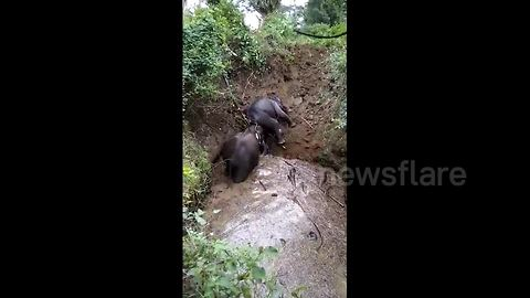Villagers cheer as wild elephant rescues friend after falling into 20-foot-deep well