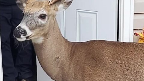 Curious deer wants to enter family's home
