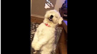 Dancing puppy will brighten your day