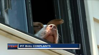 Neighbors turn to I-Team about dangerous dog - Video