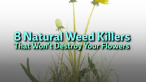 8 Natural Weed Killers That Won't Destroy Your Flowers