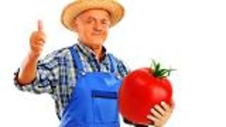 Genetically Engineered Tomato for Cholesterol