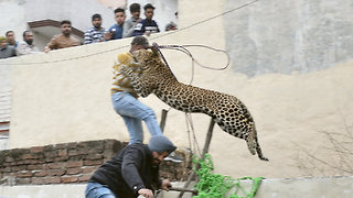 Panicked Leopard Injures At Least 4 People in Indian Village