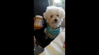 The hilarious and adorable moment pet dog realises she is a dog - Video