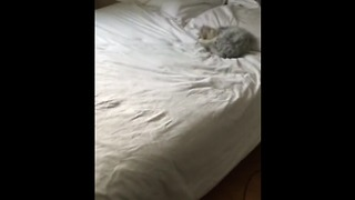 Bet You Haven't Heard A Cat Make This Noise Before  - Video
