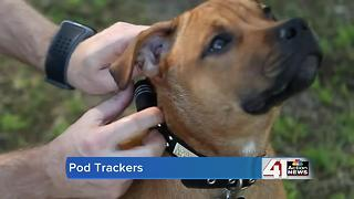 4 devices to help you keep track of your pets - Video