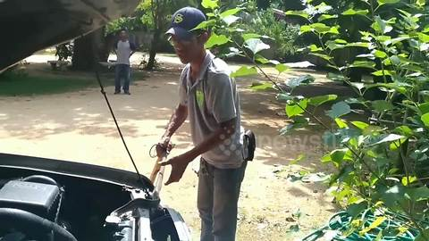 Fearless man pulls snake out of car engine with bare hands