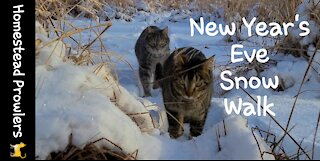 Homestead cats Enjoy nature walk in the snow