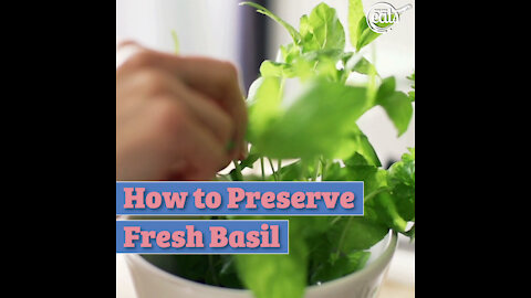 How to Preserve Fresh Basil