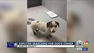 Martin County deputies searching for dog's owner