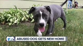 Abused dog Chandler gets new home - Video