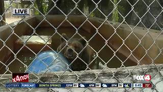 Octagon Wildlife Sanctuary rescues threatened, abused animals -- 8:30am live report