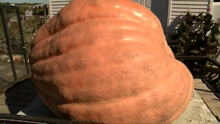 The heaviest pumpkin weighed in Wisconsin is 2,015 pounds