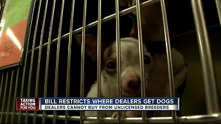 Bill restricts where dealers get dogs - Video