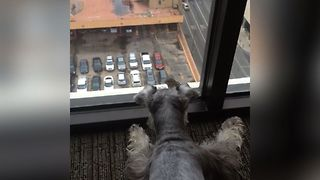 Dog Plays With Bird - Video