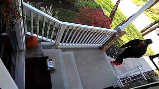 Thief steals Amazon package from porch in daylight - Video