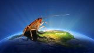 49-Million-Year-Old Cockroach Discovered