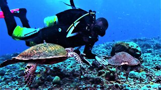 Scuba diver greeted by two endangered sea turtles that he rescued