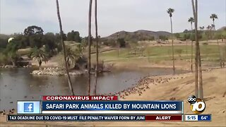 Animals at Safari Park killed by mountain lions