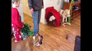Funny Dog Takes Down RC Helicopter - Video