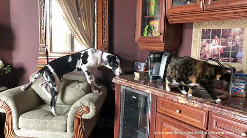 Cat reminds Great Dane to respect her personal space