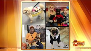 Halloween Safety Tips for Your Furry Friends - Video