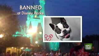 Never bring these things to Disney parks