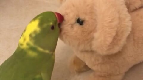 Clever parrot talks and plays with barking toy doggy