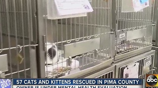 Dozens of cats rescued from hoarding situation in Tucson - Video