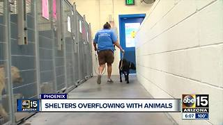 Maricopa County shelters overflowing with animals - Video