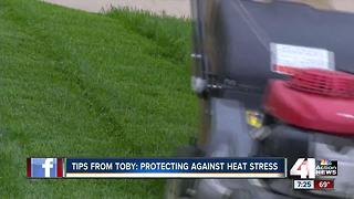 Tips from Toby: protecting against heat stress