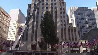 Rockefeller Center Christmas tree arrives in NYC - Video