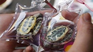 Animal Keychains - Video