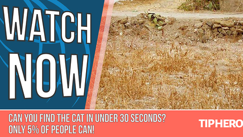 Cat Hides Masterfully In An Optical Illusion