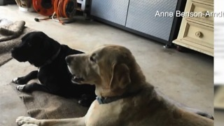 Rattlesnake bites two dogs in The Acreage - Video