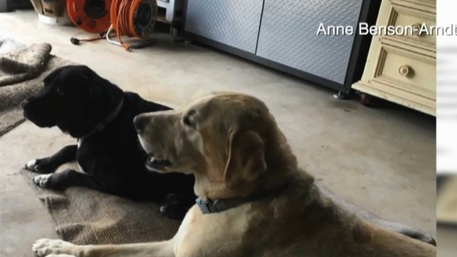 Rattlesnake bites two dogs in The Acreage