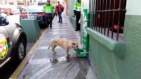 Police In Peru Sets Up Food And Water Dispensers For Abandoned Dogs