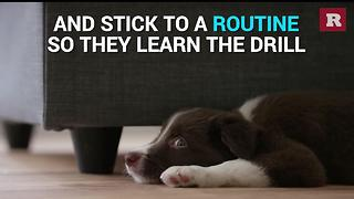 How to potty train a puppy   Rare Animals - Video