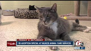 $5 adoption special at Muncie Animal Care services