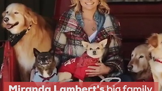 Country Stars and Their Rescue Pets