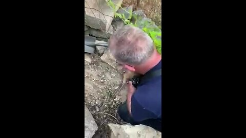 North Charleston Fire Department Rescues Puppy From Pile Of Rocks